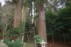H29巨木ツアー写真