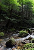 10初夏の渓谷