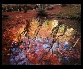 11五色に光る池