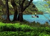 25湖北春景色