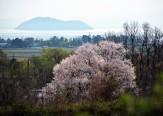 27湖北の春