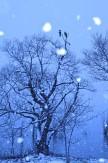 28風雪の湖畔