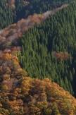 17森林の秋