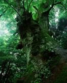 24巨木の四季