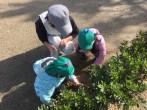 園児代表によるツツジへの土かけ