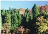 13森林水景色(ネガ)