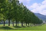 15新録の並木道