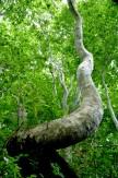 19森のダンサー