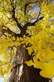 24神宿る木