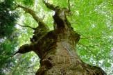 29いのちあふれる古木