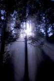 33妖精の森