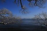 16 湖畔の冬樹