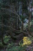 21 生命つなぐ森