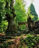 25 森林の老木