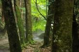 26 潤う木々~川霧立つ渓谷~