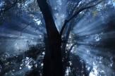 27 光芒の森