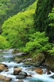 3 新緑の渓流