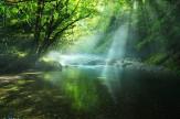 6 緑陰の渓流