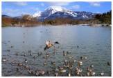 8 水鳥の楽園