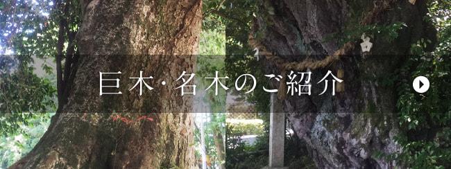 巨木・名木のご紹介