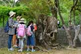 17大樹に学ぶ