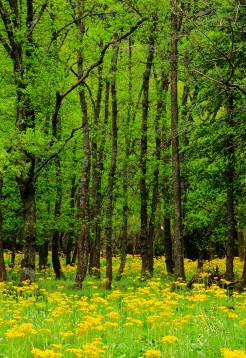 01林の中のお花畑