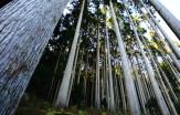 16豊かな森