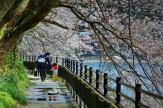 24春色の散歩道